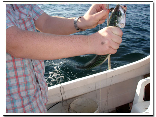 makrillfiske i pappas båt